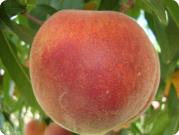 peach_princess-time